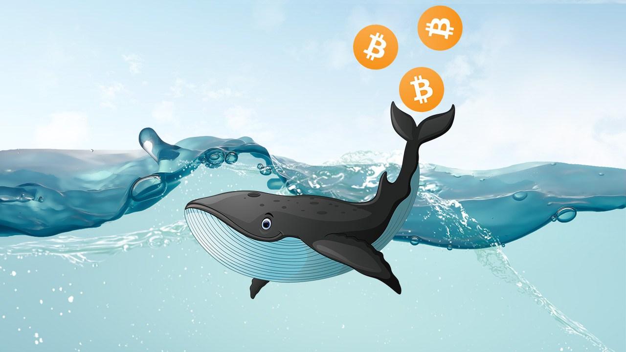 Биткоин-киты