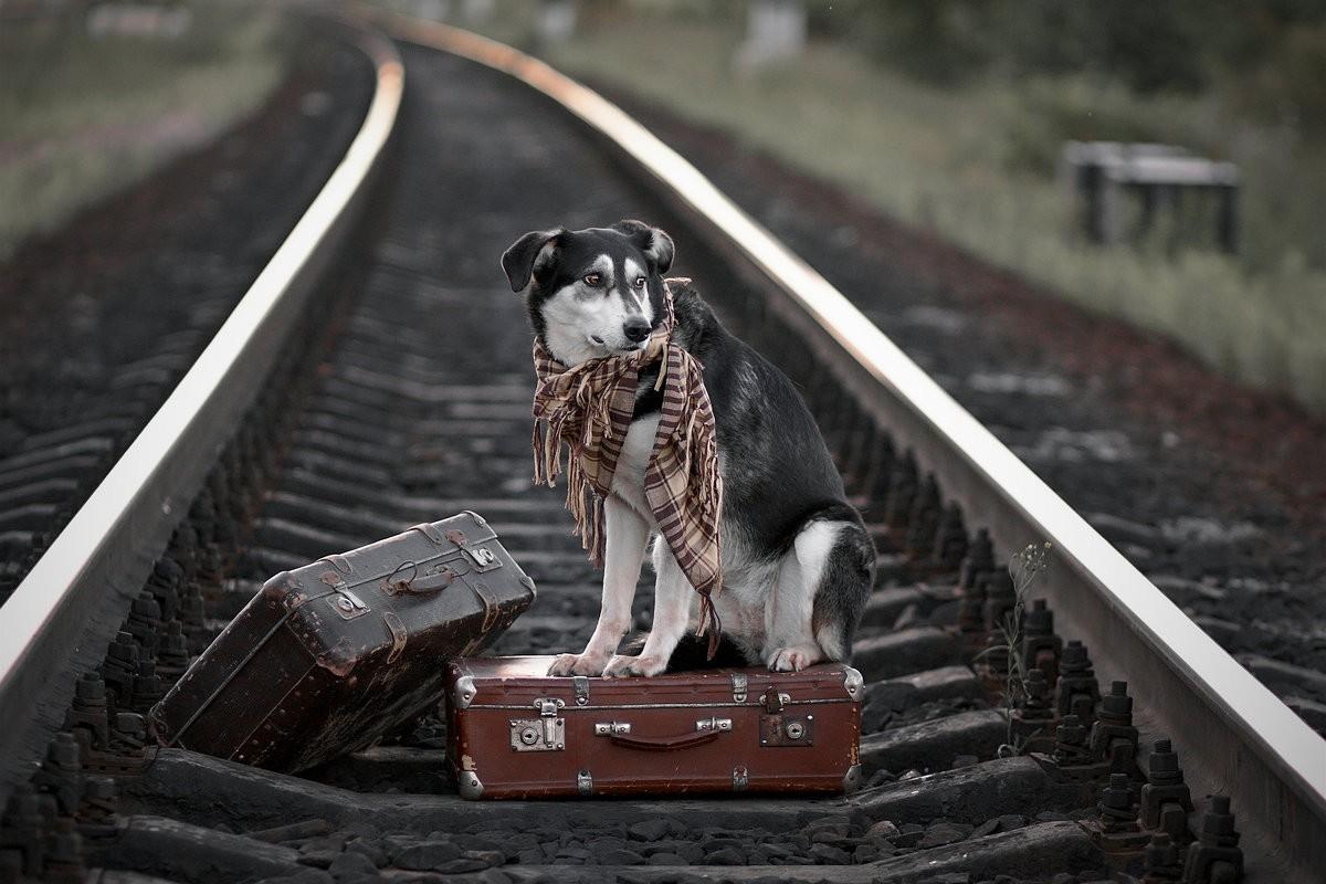 Поезд ушел?
